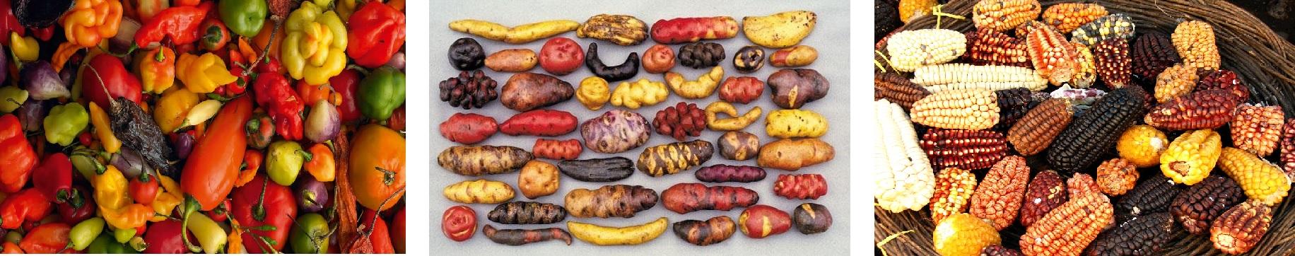 chili-majs-kartofler